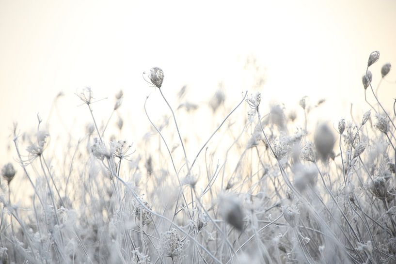 Frozen flowers van John Arts