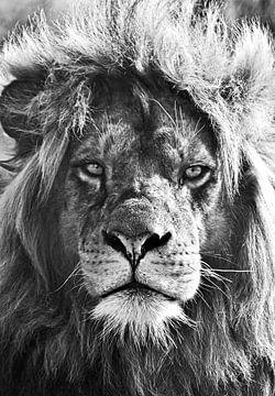 Leeuw, lion, löwe van Maartje van Tilborg