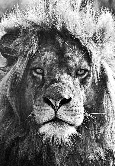 Leeuw, lion van Maartje van Tilborg