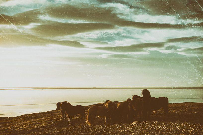 Saman erum við sterk van Islandpferde  | IJslandse paarden | Icelandic horses