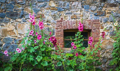 stokrozen voor een oude natuurstenen muur