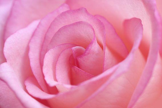 Mooi in het roze..