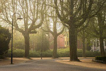 Noorderplantsoen Groningen, Mistig bomen in het Noorderplantsoen bij de plantsoenvijver van Hessel de Jong