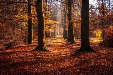 Laan met bomen in het Sterrenbos in Gorssel in Herfstkleuren. van Bart Ros