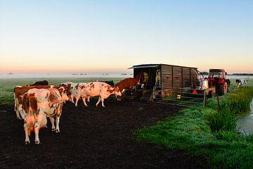 Koeien Melken bij Zonsopkomst von Charlene van Koesveld