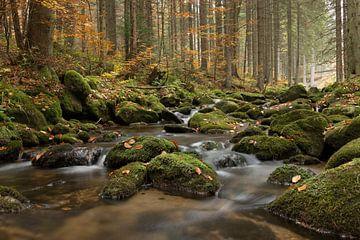 Herfst van Elles Rijsdijk