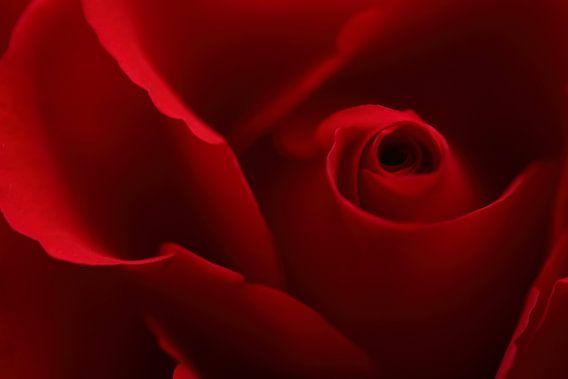 Red rose petals van LHJB Photography