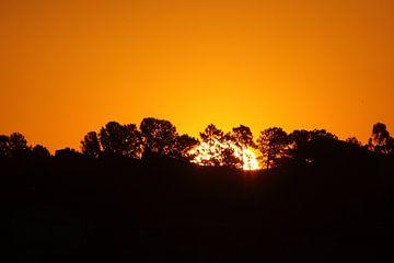 Coucher de soleil à l'Americana sur Birdy Flying