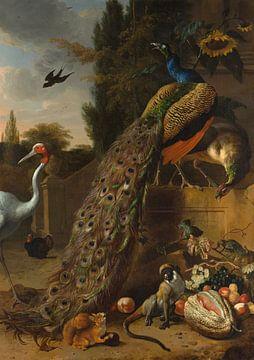 Pfauen, Melchior d'Hondecoeter von