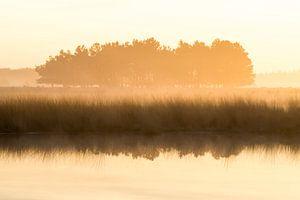Strabrechtse Heide 193