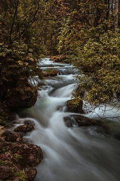 Märchenwald am Hintersee