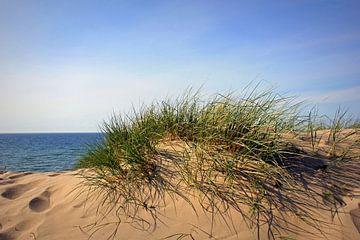 Farbenfrohe Dünen von Ostsee Bilder
