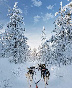 Contact met husky in de sneeuw van Rietje Bulthuis