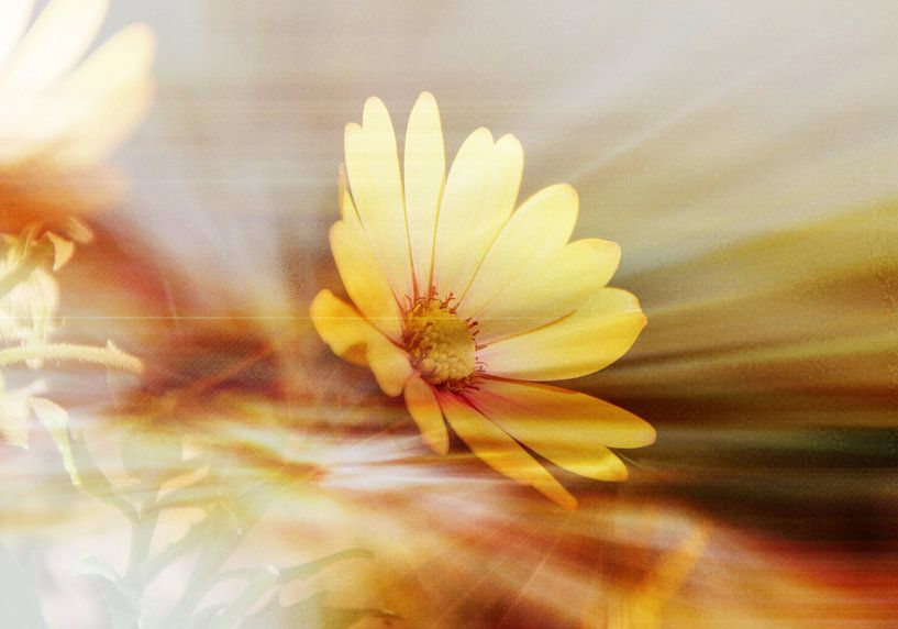 Blütentraum van Rosi Lorz