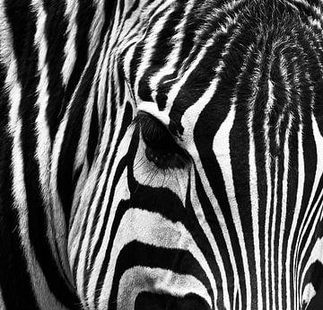 Zebra close-up in zwart-wit van Marjolein van Middelkoop