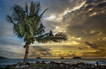 Eenzame Palm na de storm van