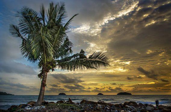 Eenzame Palm na de storm