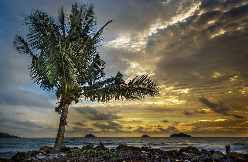 Eenzame Palm na de storm van Sven Wildschut