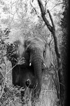 Sandwurfelefant im Wald von Jarno Dorst