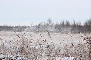 winterlandschap von loes spit