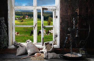 Vue de la fenêtre sur Jürgen Wiesler
