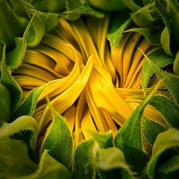 Sonnenblume von Wim van Beelen