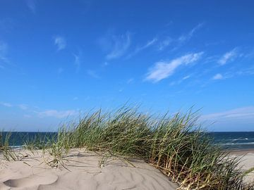 Sandwellen von Ostsee Bilder