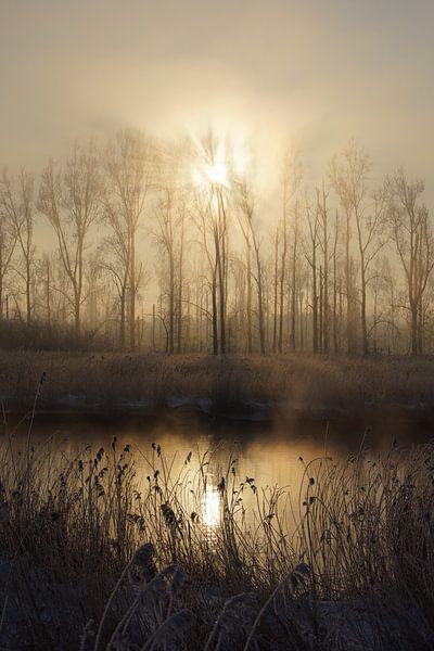 Winter in de Hollandse Biesbosch van Michel van Kooten