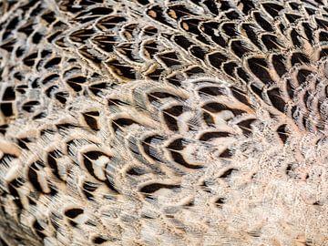 Closeup van fazant vrouw