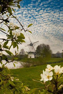 Mühle der Schmetterling, Blüte von Nynke Altenburg