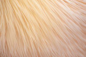 Zacht verenkleed pelikaan van Margreet Frowijn