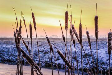 Vroege koude winterochtend sur Jo Pixel