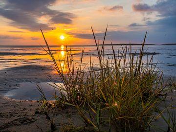 Wattenmeer an der Nordsee bei Sonnenuntergang von Animaflora PicsStock