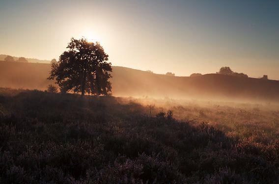 beautiful gold misty sunrise on hills