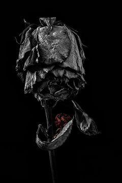 Stillleben Rose von Steven Dijkshoorn