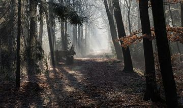 la lumière du soleil dans les bois avec le brouillard