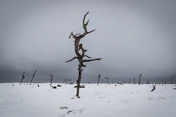 Noir Flohay in de winter van Francois Debets