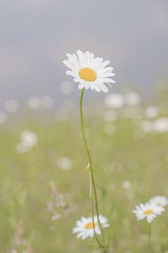 Wit bloempje in het veld