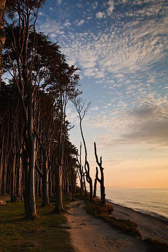 Gespensterwald  von Rico Ködder