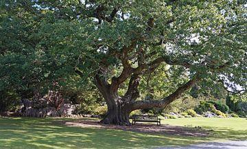 Ruhebank unterm Baum von Babetts Bildergalerie