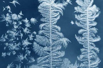 Des fleurs de glace sur la vitre de la fenêtre sur Karina Baumgart