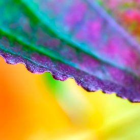 Buntes Detail eines Herbstblattes von Anouschka Hendriks