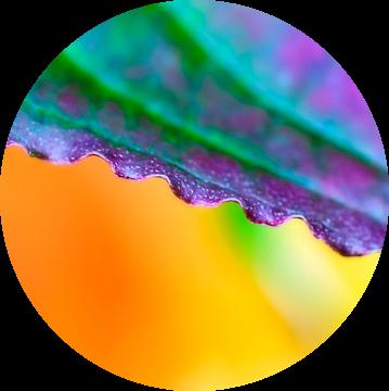 Kleurig detail van een herfstblad van Anouschka Hendriks