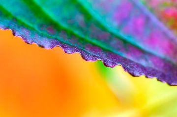 Buntes Detail eines Herbstblattes