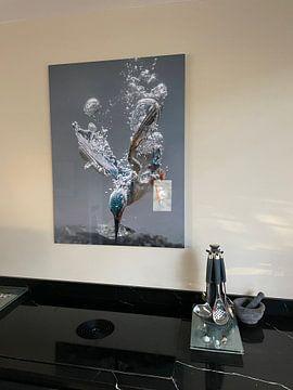 Kundenfoto: Eisvogel von Tariq La Brijn