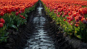 Zwischen den Tulpen verläuft die Karrenbahn von Studio de Waay