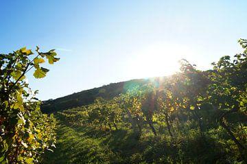 Wijngaarden van Markus Jerko