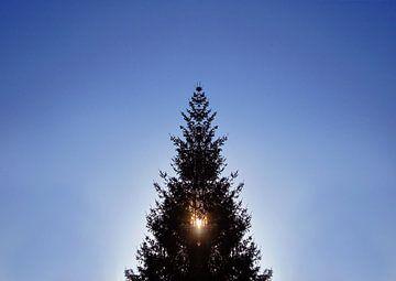 L'arbre de Noël à contre-jour