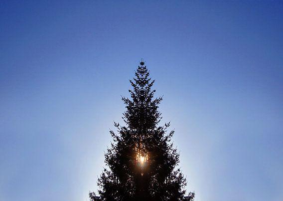 Weihnachtsbaum im Gegenlicht