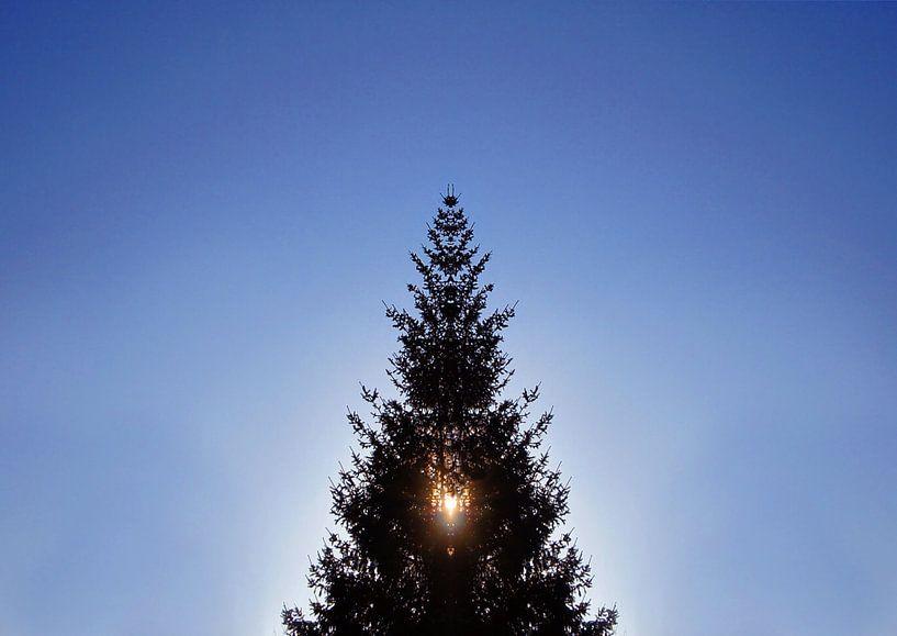 Weihnachtsbaum im Gegenlicht von Markus Jerko